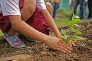 Cuidando una planta